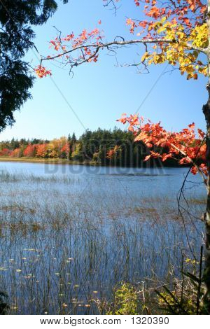 Autumn Pond - Maine