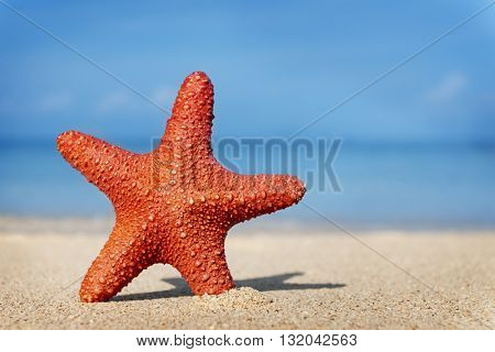 Starfish Beach Summer Holiday Vacation Peaceful Concept