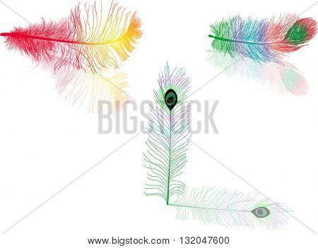 illustration with three colored feathers isolated on white background