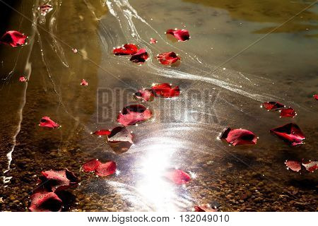 Sun glares on the water surface highlighting the ashes that have been spread in a lake. Rose petals float along with the ashes.