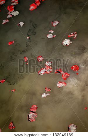 Rose petals and the ashes of a loved one float on lake water as they are being scattered.