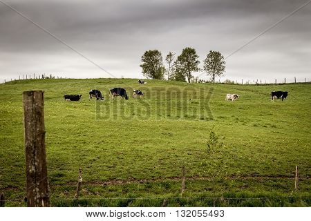 cloudy landscape of cow pasture dramatic scenic