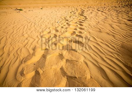 footsteps on desert with sand dunes at dubai