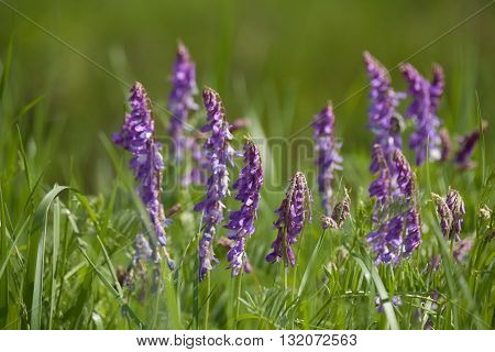 Field with meadow herb. Macro. Floral nature background