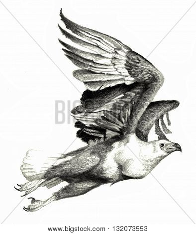 Flying eagle on a white background. Hand drawing