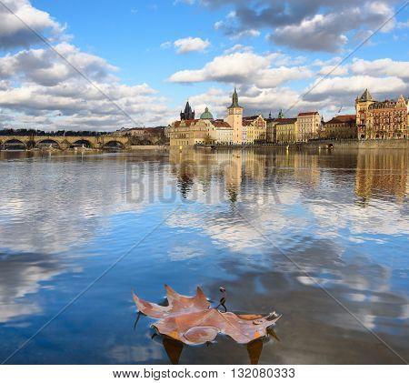 Autumn maple leaf on the Vltava River in Prague