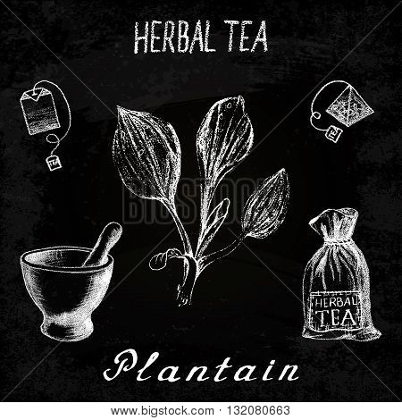 Plantain herbal tea. Chalk board set of vector elements on the basis hand pencil drawings. Herb Plantain tea bag mortar and pestle textile bag. For labeling packaging printed products