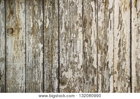 White paint peeling off the wooden wall obsolete wood planks texture