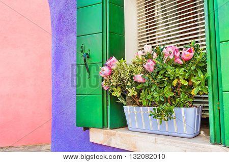 Flowers On The Window.