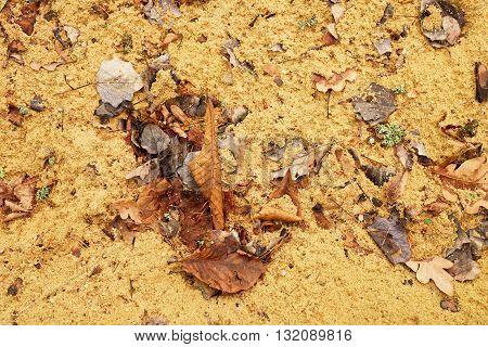 Autumn leaves on wet dirt sandy road. Rotten dark leawes on sand ground sandbox.