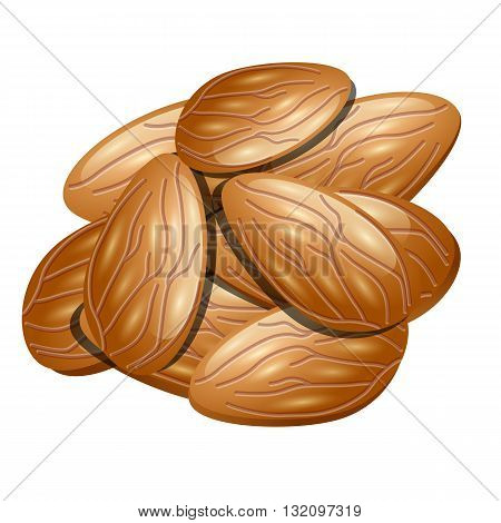 Nuts almond, vector illustration isolated on white