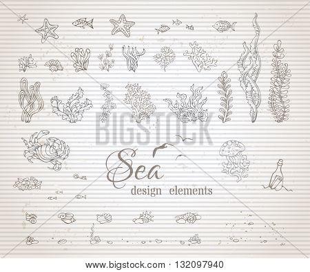 Vector Set Of Vintage Sea Life Design Elements.