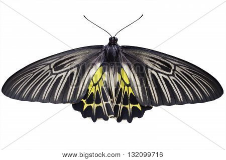 Butterfly with open wings with clipping path
