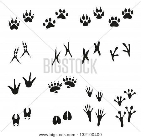 Tracks of wild animals and birds. Paw print. Isolated icons on white background.