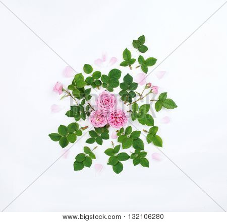 Colorful pattern with fresh leaves and flowers of roses. Flat lay top view