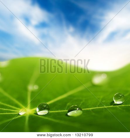 Green leaf with water drops on it (shallow DoF)