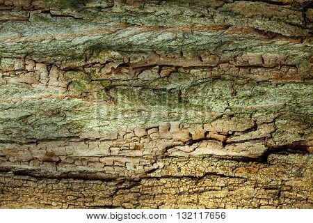 Old wood tree bark on brown woody plant background