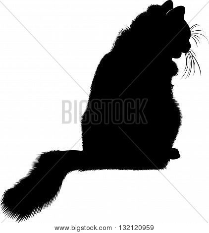 Black cat silhouette. cat.  cat animal. animal black cat silhouette vector isolated on white background