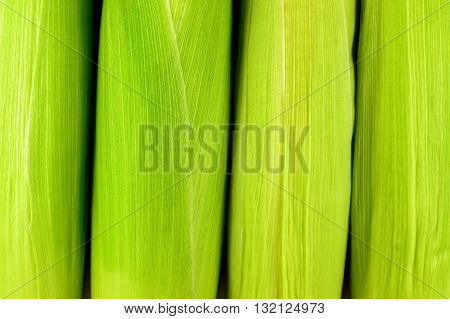 Fresh raw corn . Texture background corn