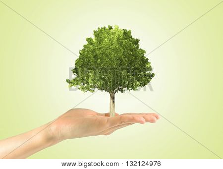 Miniature Tree In A Human Hand
