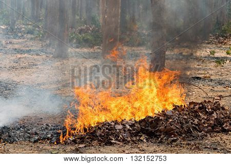 nature disaster. fire, forest, burn, tree, bush, wild,