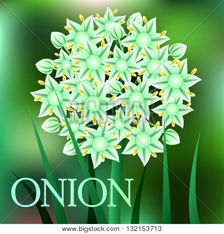 Beautiful spring flowers Onion. Cards or your design with space for text. Vector illustration