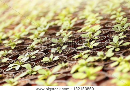 the spring plants seedlings under the sunlight