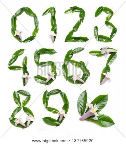 Green Digits. Floral alphabet. Leaves and flowers