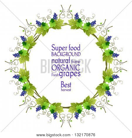 Blue grapes frame. The natural design banner,ticket, leaflet and so on. Place for text. Isolated elements.