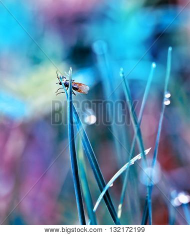 fly in the dewy grass bright sunny morning bokeh background. vibrant color