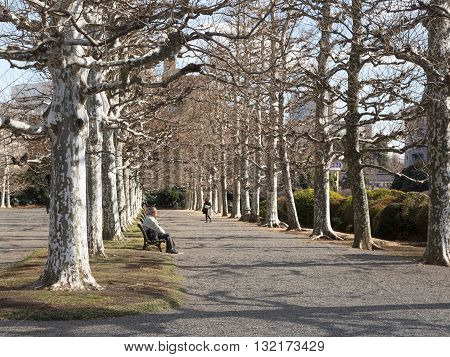 Tokyo - February 6 2015: An elderly Japanese man resting on a bench in the park and the road is a beautiful young woman and powerful bare trees in winter around February 6 2015 Tokyo Japan