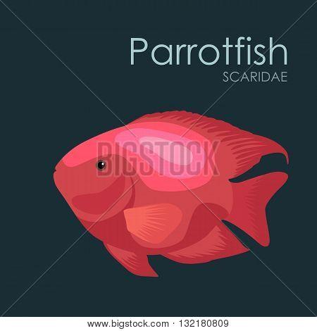 Aquarium fish Parrotfish, vector illustration isolated on dark background. Fish flat style vector illustration.
