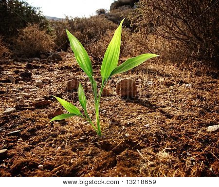 Green plant growing through dry soil