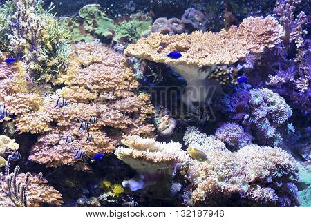 Beautiful Sea Life With Fish Swimming Against Of Corals