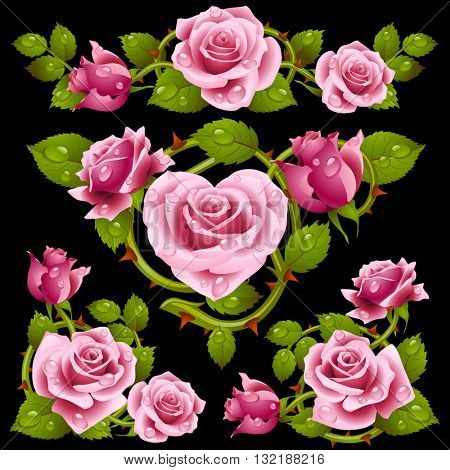 Vector pink Rose design elements isolated on white background