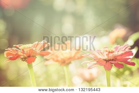 Amazing beautiful flower. Light summer background. Sunlight.
