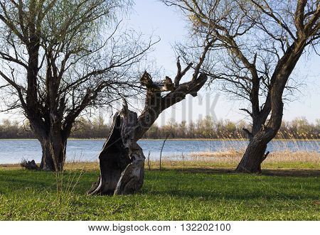River landscape with driftwood old  root   forest