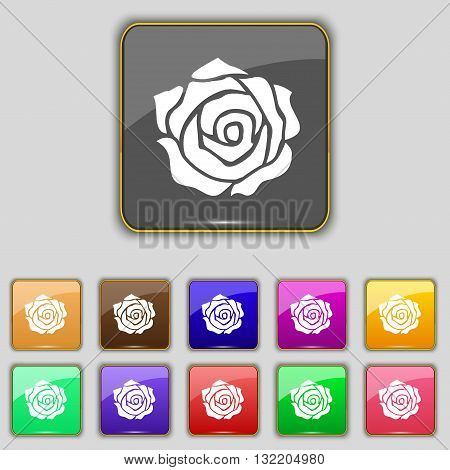 Rose Icon Sign. Set With Eleven Colored Buttons For Your Site. Vector
