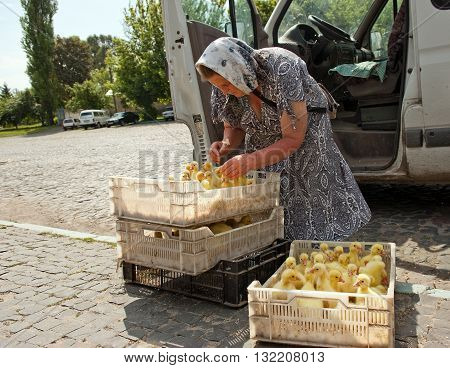 Lutsk, Ukraine - June 8, 2011: Woman sells ducklings from boxes on the ground on farmers market in Lutsk. Small-scale family farms are widespread in Ukraine.