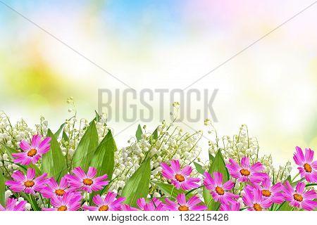 cosmos flowers. Beautiful flowers cosmos. Summer landscape.