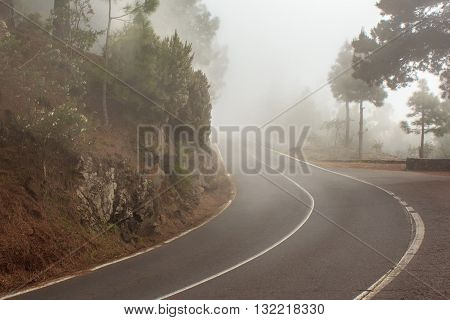 foggy road in forest - street in misty forest
