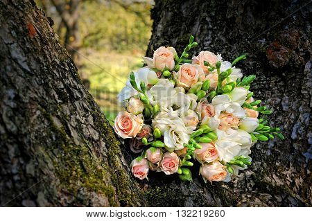 tender fresh rose wedding bouquet on tree rind