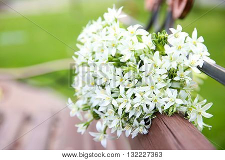 Bouquet of little white flowers on wooden bench