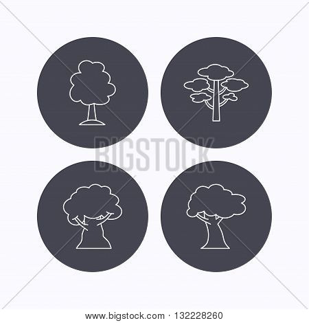 Pine tree, oak-tree icons. Forest trees linear sign. Flat icons in circle buttons on white background. Vector