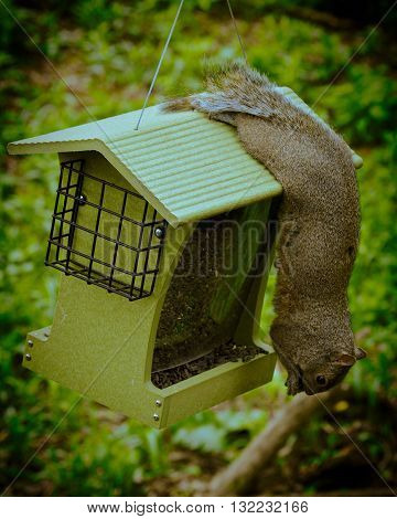 A squirrel eating seeds from a bird feeder