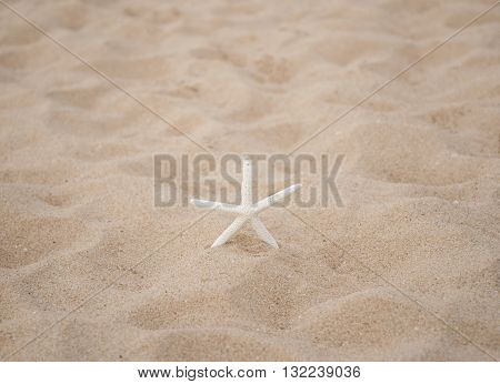 Star fish on sand background. Close-up and select focus star fish