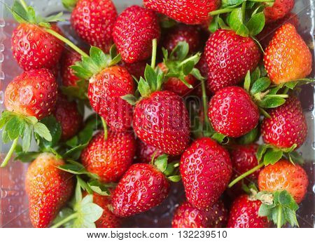 Fresh natural strawberry background from a farm