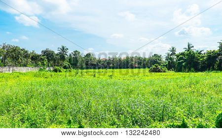 Landscape View Of Deserted Land With Green Grass And Tree With Blue Sky And Cloud