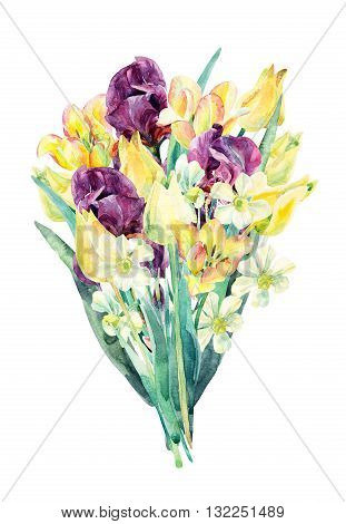 Watercolor flowers bouquet. Watercolor floral garden card with tulip daffodil and iris. Painted flowers isolated on white background. Floral illustration for greetings invitations wedding design