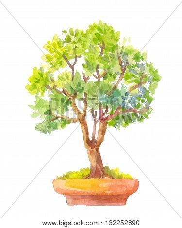 Bonsai illustration. Watercolor illustration of bonsai. Crassula watercolor tree.